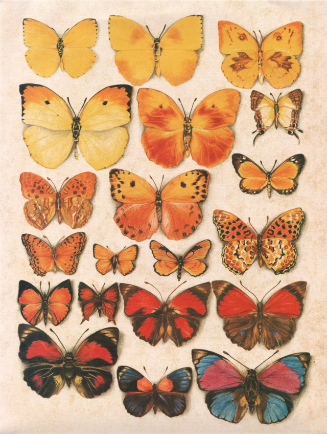 mariposas amarillas